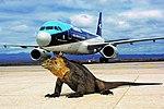 Tame A320, Galapagos.jpg