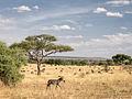 Tanzania - Individualist (11087418145).jpg