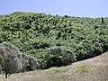Tararua bush at Otaki Forks.jpg