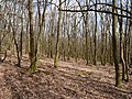 Taunus forest at the Langhals mountain.jpg
