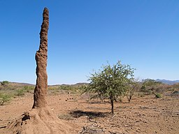 Termitenhuegel-kenia