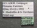 Tetramorium bicarinatum casent0173283 label 1.jpg
