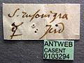 Tetraponera rufonigra casent0103294 label 1.jpg