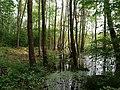 Teufelsbruch swamp next to crossing path in summer 15.jpg