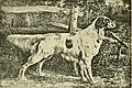The American book of the dog. The origin, development, special characteristics, utility, breeding, training, points of judging, diseases, and kennel management of all breeds of dogs (1891) (17495067004).jpg