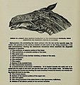 The American reformed horse book - a treatise on the causes, symptoms, and cure of all diseases of the horse, including every disease peculiar to America; also embracing full information on breeding, (14779775141).jpg