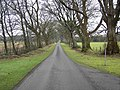 The Avenue. - geograph.org.uk - 663490.jpg