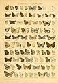 The Macrolepidoptera of the world (Taf. 78) (8145300764).jpg