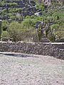 The Ruins of the Quilmes civilization - panoramio (4).jpg