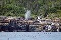 The Spout, Newfoundland.jpg