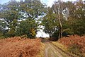 The Wealdway on the edge of Five Hundred Acre Wood - geograph.org.uk - 1584554.jpg