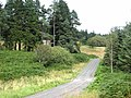 The clearing at Chartners, Harwood Forest - geograph.org.uk - 541504.jpg
