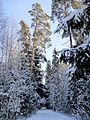 The first winter week 2012 - panoramio (1).jpg