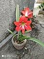 The flower in summer.jpg