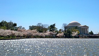 National Cherry Blossom Festival - The Jefferson Memorial during the 2010 National Cherry Blossom Festival