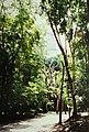 Tikal (9791218795).jpg