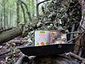 Tin can in the Hambach forest.jpg
