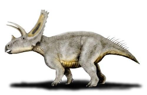 Titanoceratops NT
