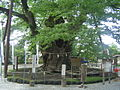 Titibuimamiya-ryujinboku.jpg