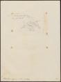 Todirostrum nigriceps - 1855 - Print - Iconographia Zoologica - Special Collections University of Amsterdam - UBA01 IZ16500269.tif