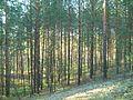 Tomsky District, Tomsk Oblast, Russia - panoramio (94).jpg