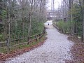 Trail 11 to Lodge P4190066.jpg