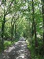 Tree lined path - geograph.org.uk - 1338798.jpg
