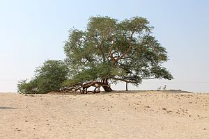 Tree of Life, Bahrain - Tree of Life