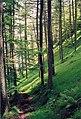 Trees beneath Raven Crag - geograph.org.uk - 82449.jpg