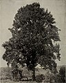 Trees for Long Island (1900) (20369752298).jpg