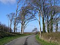 Trees on the avenue to Tintern Abbey - geograph.org.uk - 1292024.jpg