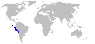 Spotted houndshark Species of shark