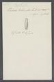 Trichoda pellionella - - Print - Iconographia Zoologica - Special Collections University of Amsterdam - UBAINV0274 113 18 0028.tif