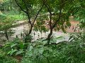 Tungareshwar Wildlife Sanctuary (1081232991).jpg