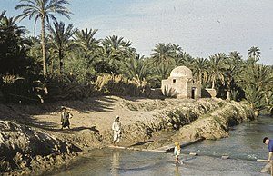 Djerid - The oasis of Tozeur in 1960