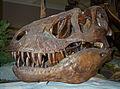 Tyranosaurus rex skull.jpg