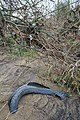 Tyred Debris - geograph.org.uk - 1183435.jpg