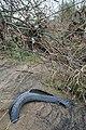 Tyred Debris - geograph.org.uk - 1183435.jpg