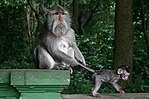 Ubud Monkeys.jpg