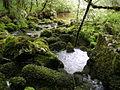 Una de las fuentes del rio Latarma.JPG