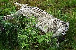 Ähtärin eläinpuisto – Wikipedia