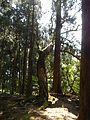 Untitled - panoramio - kiwa dokokano (22).jpg