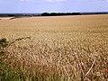 View across Cherry Burton Wold - geograph.org.uk - 1422434.jpg