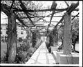 View from the under the pergola at the Maryland Hotel, Colorado Street, Pasadena, ca.1910 (CHS-5372).jpg