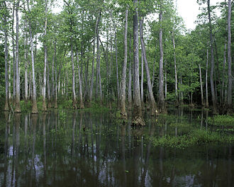 Bond Swamp National Wildlife Refuge - View in Bond Swamp National Wildlife Refuge
