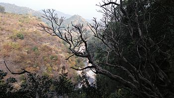 View of a small stream from the top-Borra Caves ARAKU.jpg