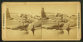 View of beached blackfish with some people standing among them, by Freeman, J. (Josiah).png