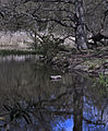 Virginia Water lake (7172946387).jpg