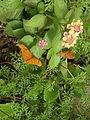 WPZ Butterflies & Blooms 04.jpg