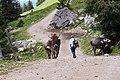 Wanderung im allgäuer Hochgebirge.jpg